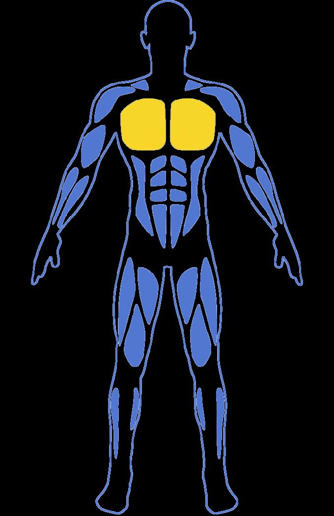 cách tập Nhóm cơ ngực